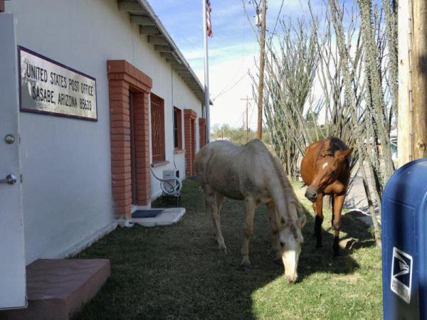 Sasabe AZ horses 102715